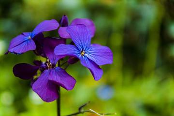 detail of purple flowers