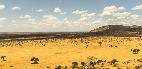 Wall Mural - Savana africana