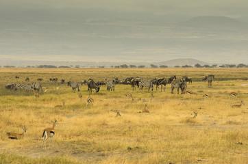 Wall Mural - Paesaggio della savana africana