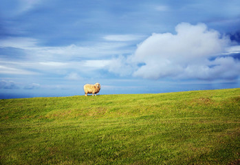 Sheep on a hill.