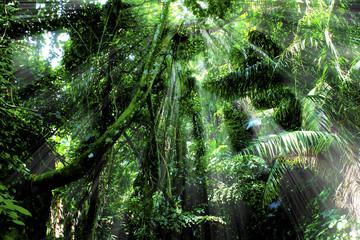 Light of Nusakambangan Forest