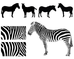 Black silhouettes of zebra and skin texture, vector