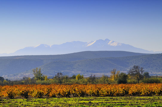 Le canigou et les vignes de  Corbières