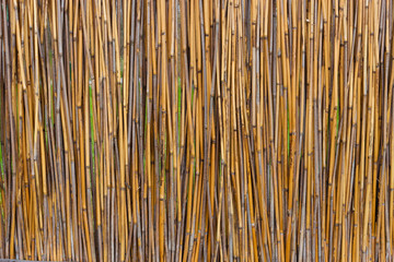reed fence, texture
