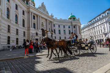 Foto op Canvas Wenen Horse-drawn Carriage in Vienna at the famous Stephansdom Cathedr