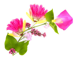 Branch of petals and flowers isolated on white