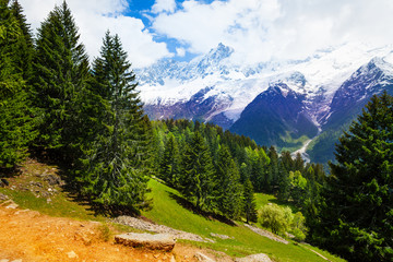 Wall Mural - Landscape with fir-trees near Mont Blanc, Alps