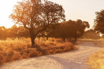 Keuken foto achterwand Baobab Road in field