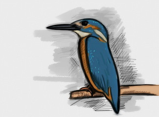 Hand drawn Common Kingfisher with paper texture, alcedo atthis