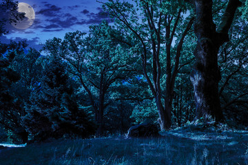 forest glade in  shade of the trees at night