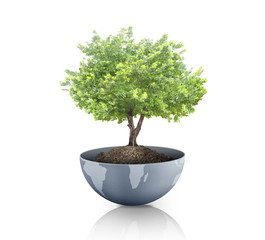 green plant on the Earth,globe