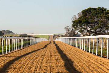 Horse Racing Sand Track