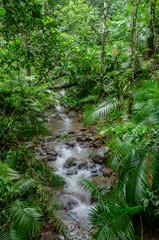 River through Rainforest