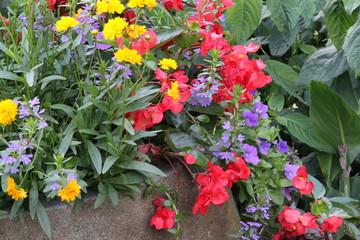 Große Pflanzschale mit bunten Blumen
