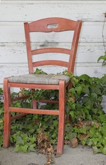Red Chair in Ivy