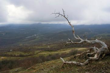 mountain pine in the background is Demerdji in the Crimea