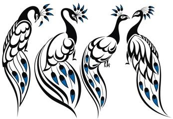 Set of peacocks