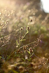 Beautiful plants at sunrise