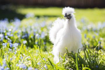 Baby hen hiding in the grass
