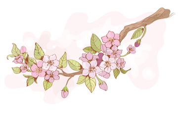 Sakura cherry branch