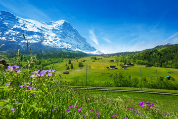Wall Mural - Blooming flowers with beautiful Swiss landscape