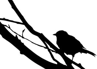 Silhouette d'un oiseau sur une branche