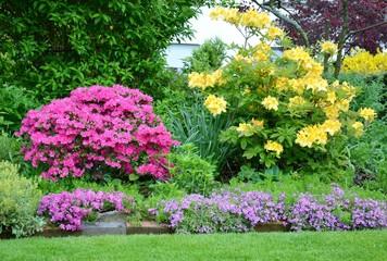 Azaleen im Garten