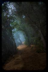 Big Sur Redwood Forest Misty Trail