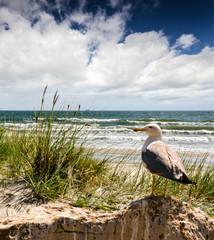 Fototapete - Strand mit Möwe :)