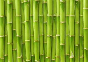 Door stickers Bamboo green bamboo background