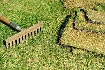 芝を植える