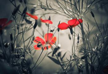 Fototapeta red flowers obraz
