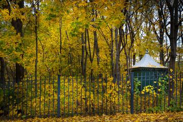 Autumn trees in a garden, Quebec City, Quebec, Canada