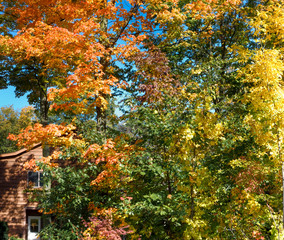 Autumn trees with house in the background