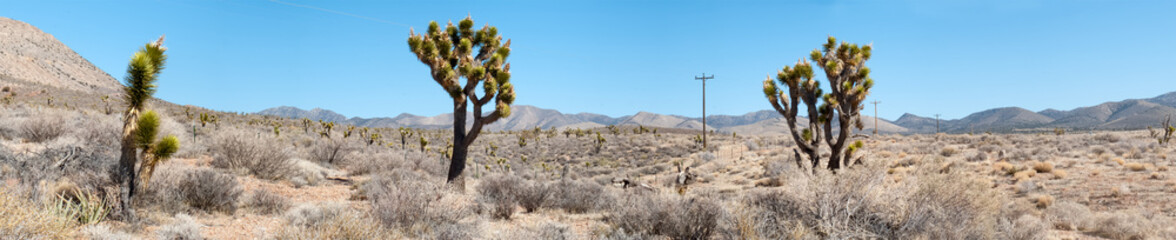Cactus in desert, Death Valley National Park, California, USA