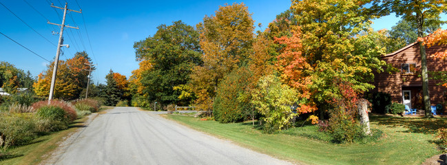 Autumn trees along a road