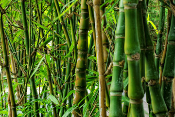 bamboo close up as background