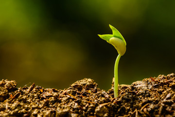 young plant, seedling, sprout, growing