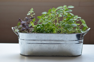 Metal flower pot with four species of basil
