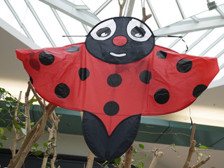 grosse coccinelle