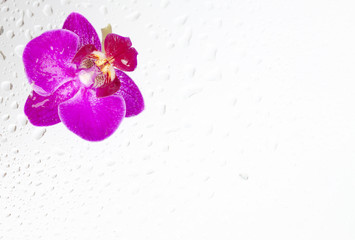 Beautiful background with purple orchid