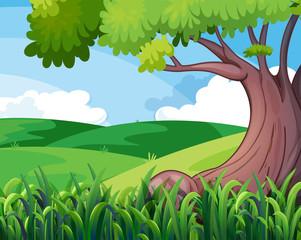 A big tree at the hills
