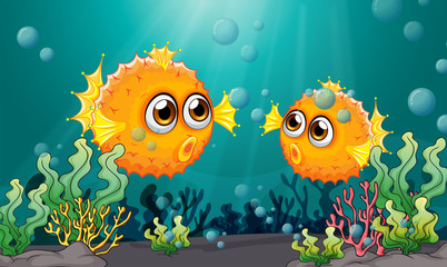 Two puffer fishes under the sea