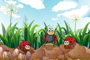 Three ladybugs above the rocks