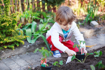 Adorable blond boy planting seeds and seedlings of tomatoes