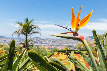 Strelitzia in Botanical garden of Funchal at Madeira Island Fototapete