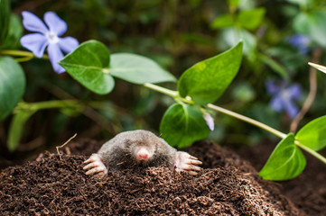 Mole in the hole