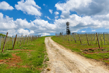 Rural road and vineyards under cloudy sky in Italy.