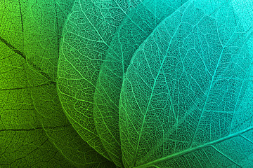 Acrylic Prints Macro photography Macro leaves background