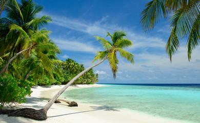 einsamer Strand mit Palmen